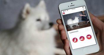 aplicaciones para cuidar mascotas