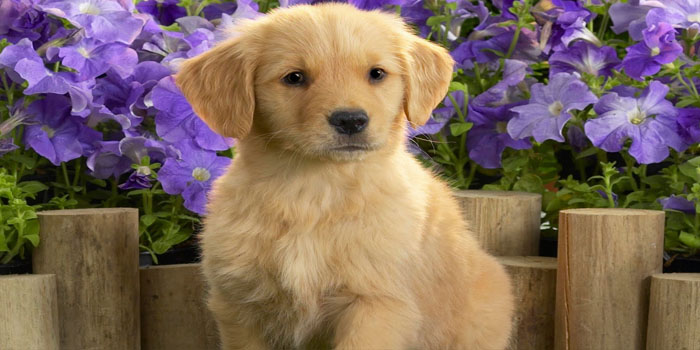 películas de perros