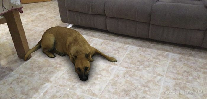 filtro del perro tumbado instagram